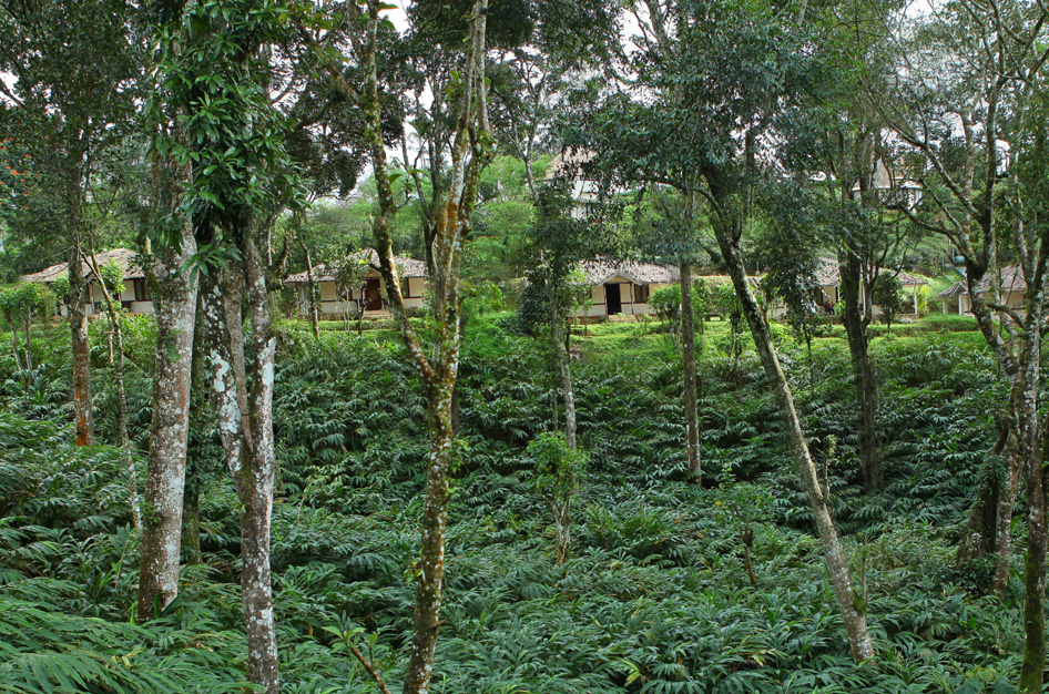 Thekkady resort, vandanmedu resorts