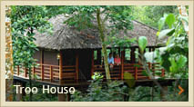 Treehouse, thekkady, Kerala, The Plantation Resort