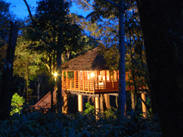 luxury treetop stay thekkady, kerala
